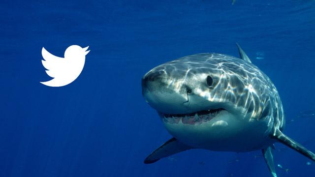 """Tiburones """"tweetean"""" su ubicación"""